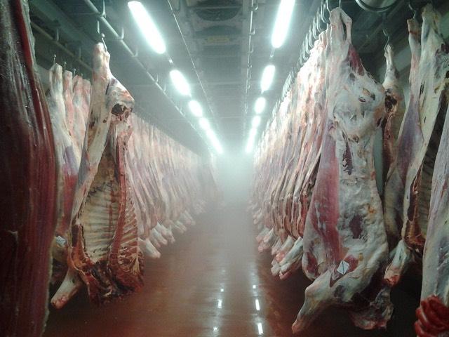 Охлаждение мясных туш гидроаэрозольным распылением на мясокомбинатах
